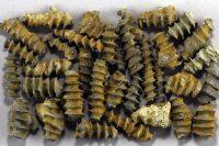 Brachiopods & Bryozoans