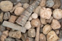 Kilo Fossils